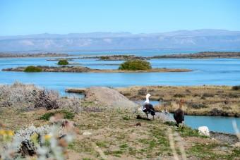Oies sauvages et lac de Patagonie