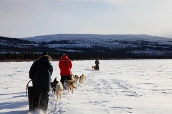 Balade en Chiens de traineaux sur un lac du Québec