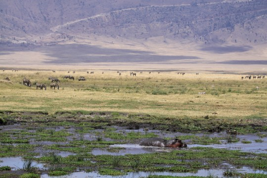 Faune dans le cratère du Ngorongoro
