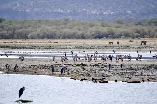 Lake Manyara National Park un paradis pour les oiseaux